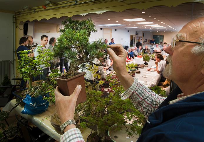 Met de opheffing van de Nivon-afdeling Oldenzaal moet ook de bonsaivereniging, die ook bijeen kwam in het gebouw aan de Thijlaan, op zoek naar een nieuw onderkomen.