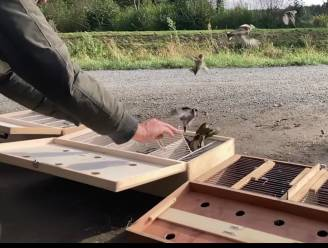 Politie laat illegaal gevangen vogels weer vrij
