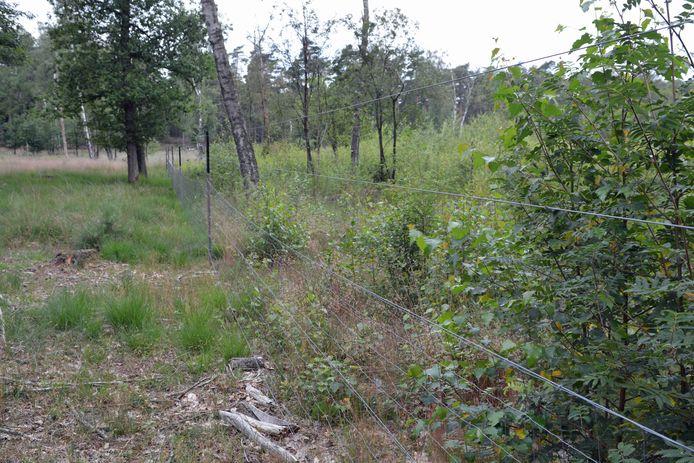 In gebieden met grote grazers zijn rasters noodzakelijk voor ontwikkeling van nieuw bos.