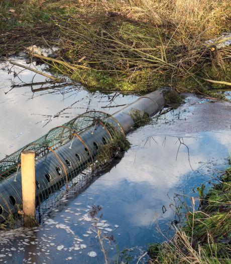 Deze 'bedrieger' lost overlast van bevers in Groesbeek op