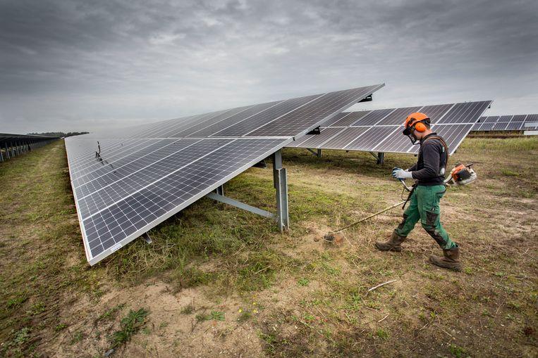 Het zonnepark in Moerdijk. Met het maaien wordt rekening gehouden met wanneer bepaalde planten hun zaad kwijt zijn.    Beeld null