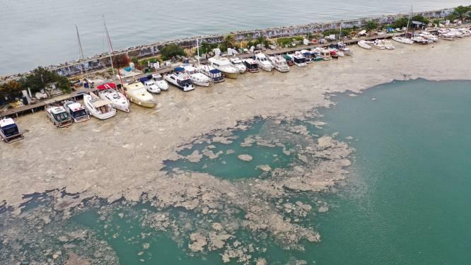 Turkse kust kampt met 'zeesnot'