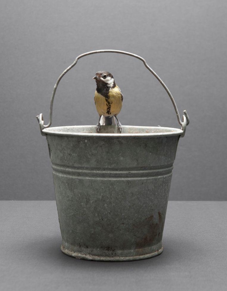 'Koolmees op emmer'   Beeld Hans van Asch