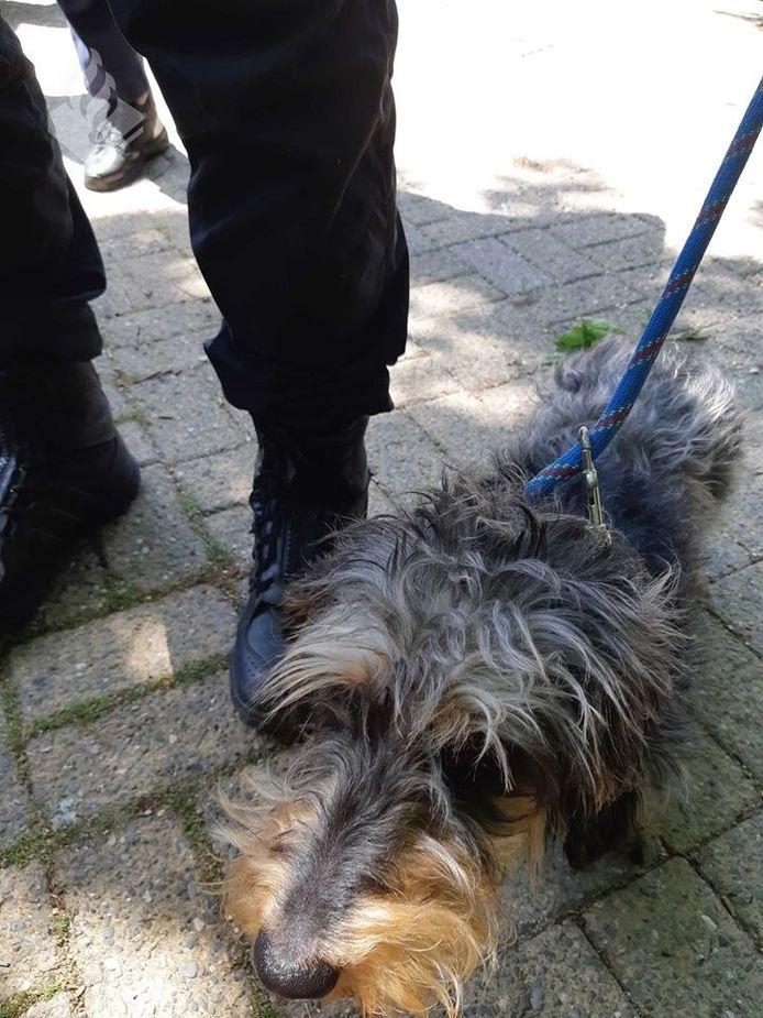 De politie heeft een hond uit een auto gered in Sambeek.