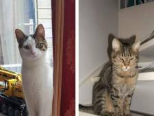 Zes katten spoorloos verdwenen in Almere Buiten