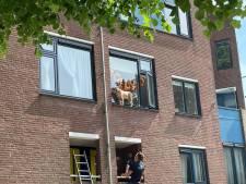 Griezelen! Buurtbewoners proberen hond uit vensterbank op drie hoog te krijgen