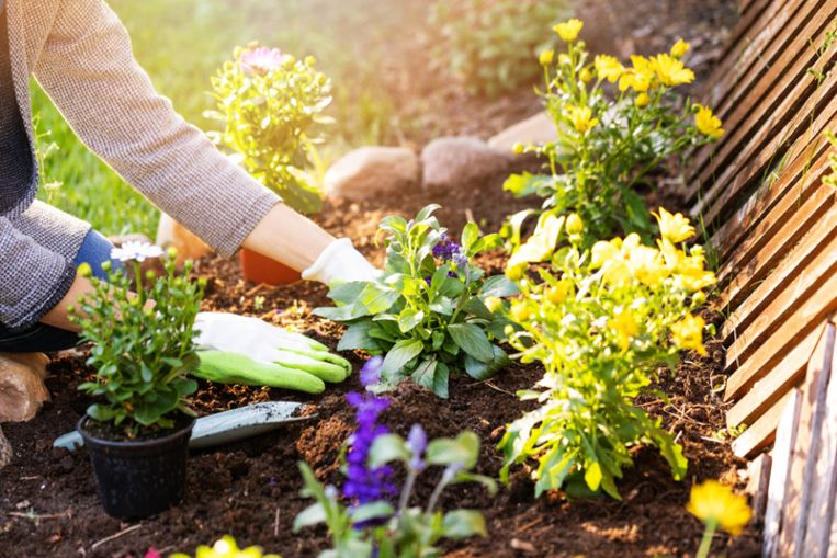 Ideaal is een gespreide bloei in je tuin. Het hele jaar door. Daarvoor heb je een basis aan plantenkennis nodig.