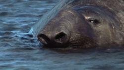 Argentinië gaat eerste maritieme nationale parken creëren