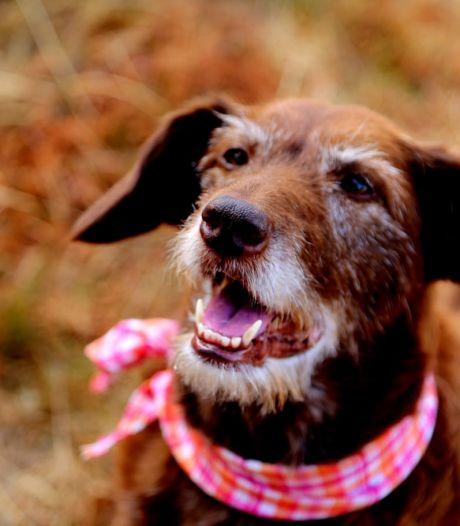 Buurman reageert op dood hondje: 'Hij kwam met een stok op me af en ik ontweek hem, toen viel ik op Neeltje'