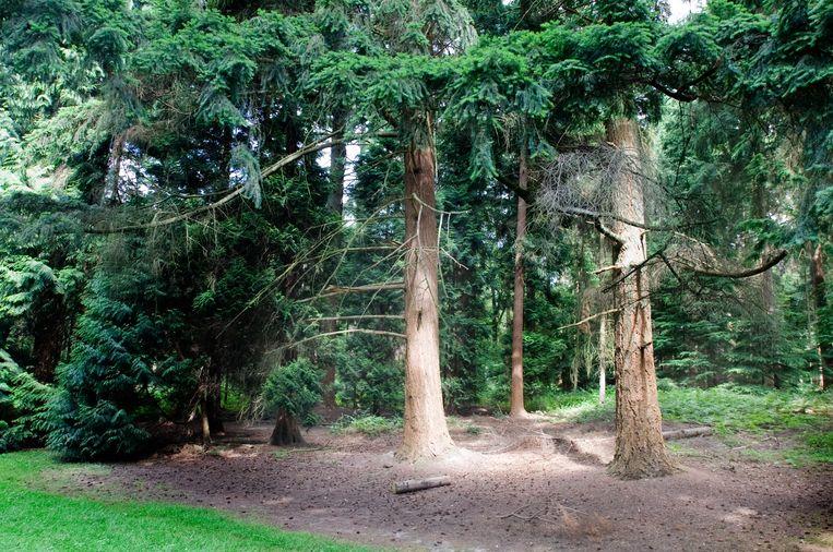 Het reetje werd gevonden in het Zoniënwoud