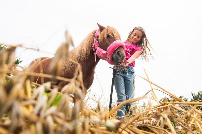 De pony Diesel mag alvast de geoogste haver proeven van Lize (9).