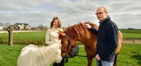 Niet goed in je vel? De paarden weten raad: 'Ze hebben mij genezen van mijn burn-out'