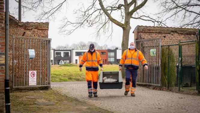 """Ganzenkoppel Papenhofpark herenigd na hondenaanval: """"Heel ontroerend"""""""