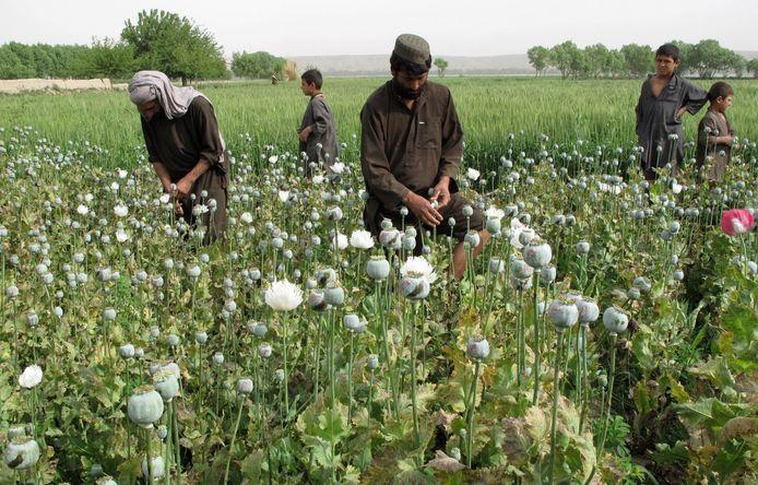 Boeren verdienen een goede boterham aan de teelt van papaver, een gewas waarvan heroïne wordt gemaakt. De drugs gaan vooral naar West-Europa en Rusland.