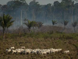 G7-landen trekken 20 miljoen euro noodhulp uit voor Amazone