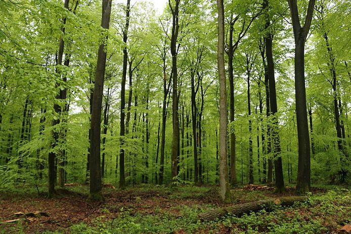 Het bos van Retz in Frankrijk, ongeveer midden tussen Parijs en de Belgische grens.
