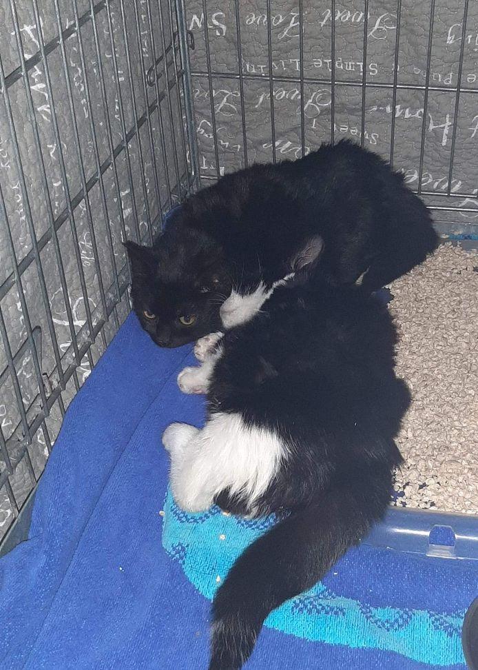 Twee jonge katten zijn oudjaarsdag gedumpt op de parkeerplaats bij de Makro in Nieuwegein. Er werd besloten de dieren in te laten slapen, omdat er te veel mis was.