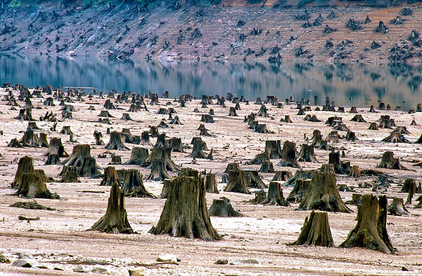 Het was ooit een groene long in Oregon.