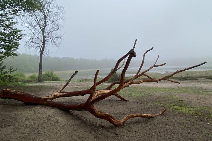 Deze foto van Vera Tonino is te zien op de expositie van Focoss in het Jan Cunenpark.