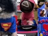 Deze hondjes stelen de show op Halloweenparade