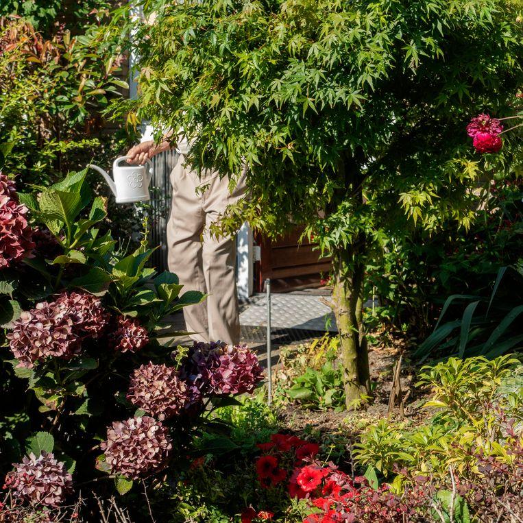 De tuin is Frits' lust en leven. 'Die van ons is heel goed voor de vogels en insecten. Belangrijk hoor, een duurzame tuin.' Beeld Desiree van den Boogaard
