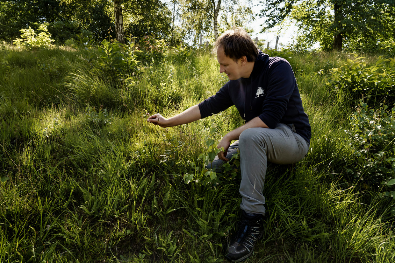Tobias Ceulemans, bioloog aan de KU Leuven, in het natuurgebied Wijngaardberg in Rotselaar. Beeld Eric de Mildt