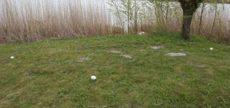 Zwaneneieren verdwijnen al jaren op mysterieuze wijze uit nest in Houten: 'Het is een verdachte situatie'