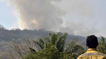 Bosbranden in Bolivia legden al bijna miljoen hectare in de as