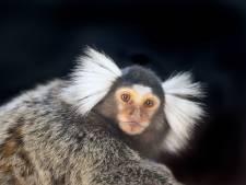 Faunapark Flakkee mag eindelijk deze dieren houden: 'We willen een gezin stichten'