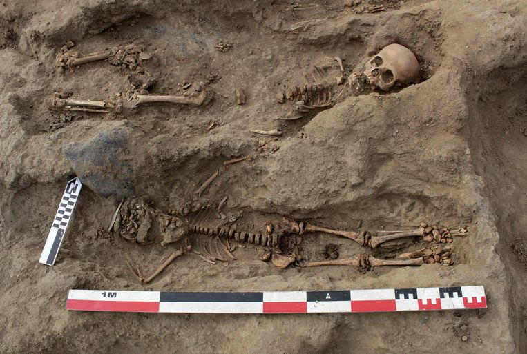 Kinderskeletten met archeologisch gereedschap in het massagraf in Noord-Peru, met het grootste aantal kinderoffers ter wereld. Beeld AFP