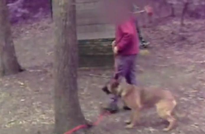 Een mishandelaar trekt hard aan de riem van de hond.