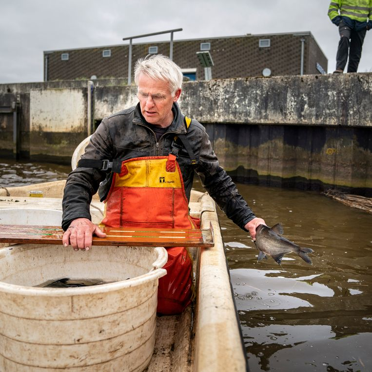 Een onderzoeker meet en controleert getagde vissen bij het gemaal Hongerige Wolf in Groningen. Beeld reyer boxem
