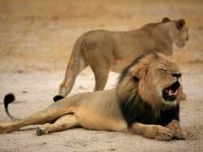Tandarts die leeuw Cecil doodde heeft spijt