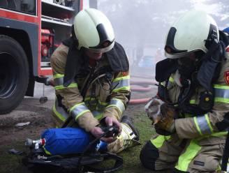 Brandweer oogst lof met redding van... cavia en hamster