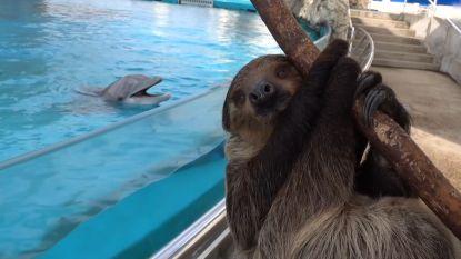 Chico de luiaard bezoekt een verlaten aquarium
