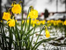 Astronomische lente begint: hou de winterjas nog wél bij de hand