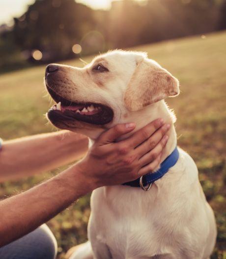 'Nooit had ik verwacht dat ik zou janken om een hond'