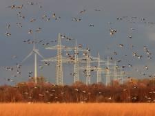 Windturbines: de grote vijand van de groeiende populatie zeearenden
