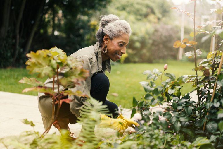retired-senior-woman-gardening-in-back-yard.jpg