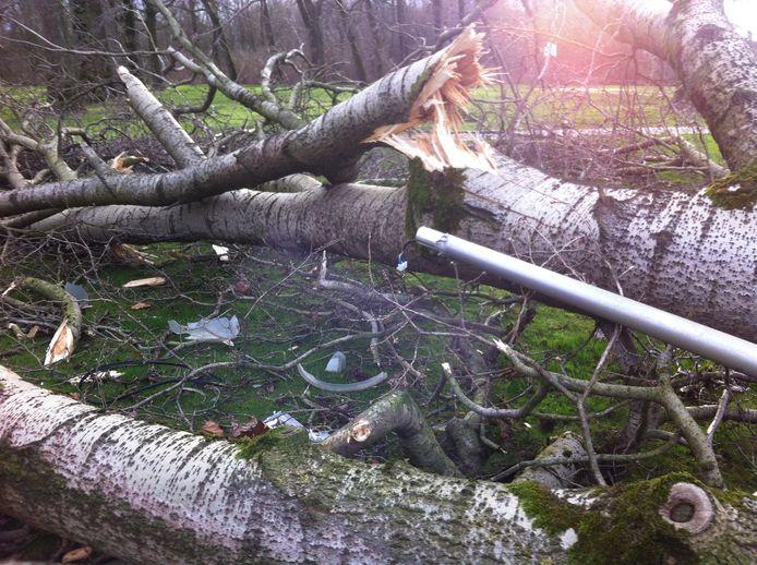 Leerlingen van het Van Maerlantlyceum zijn donderdagochtend aan de dood ontsnapt. Terwijl een paar jongens en meisjes op de ventweg tussen de ring en stadswandelpark langs een omgewaaide boom manoeuvreerden, met hun fiets aan de hand, viel er een tweede boom om, bijna bovenop hen.