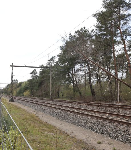 Trein rijdt tegen boom op spoor bij Wezep: 200 passagiers uit de trein gehaald