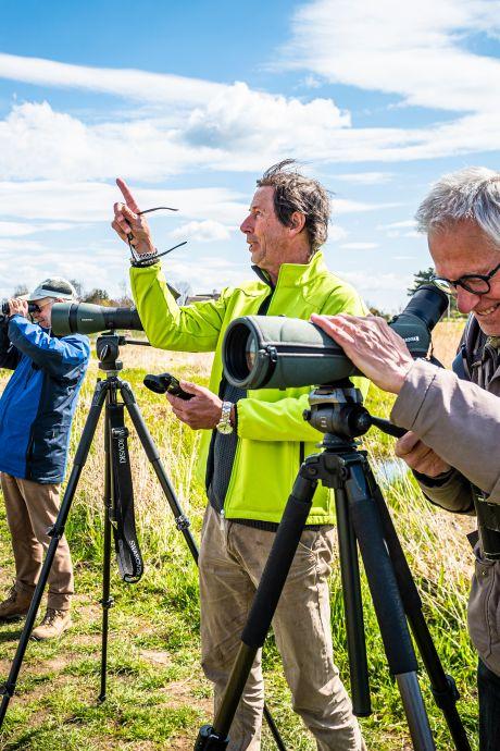 Zeldzame eend brengt hoofden van vogelaars op hol: 'Deze taling is een 'lifer', die zie je maar eens in je leven'