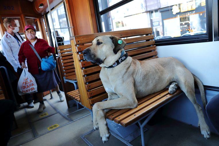 Boji neemt de tram in Istanbul. Beeld REUTERS