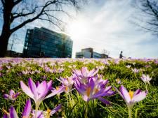 Weer een dagrecord gesneuveld, nu officieel de vroegste lenteweek ooit gemeten