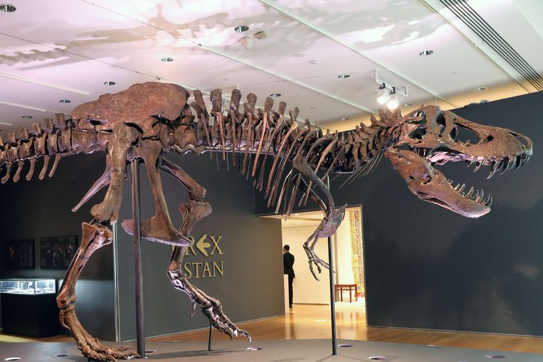Een T-rex bij Christie's in New York. Beeld AFP