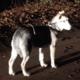 Zielig: hond in de vrieskou in Zuid-Holland achtergelaten