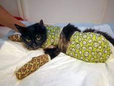 Katten beschoten, zwanen vermoord: dierenambulance moet steeds vaker uitrukken voor mishandeling