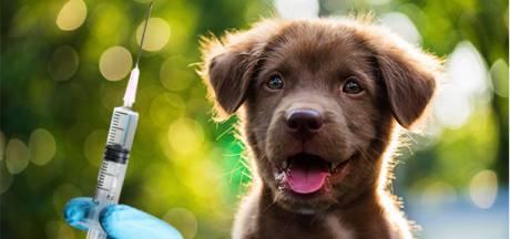 Moeten we onze huisdieren straks ook tegen het coronavirus laten vaccineren?
