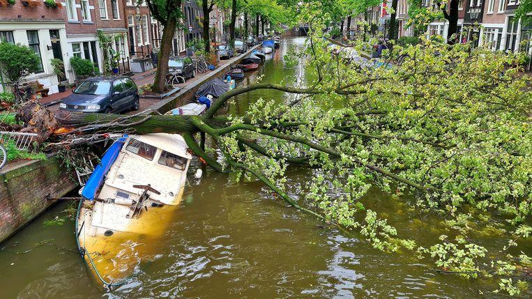 Een omgevallen boom op de Egelantiersgracht in Centrum tijdens zomerstorm Francis. Beeld ANP