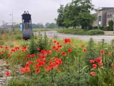 Gent kleurt rood: overal klaprozen in bloei, en dat is geen toeval